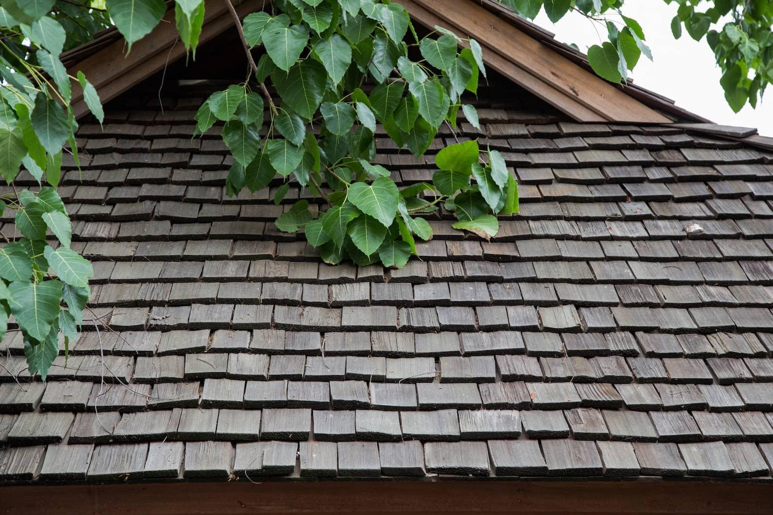aging cedar shake roof